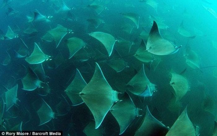 Подводный мир (5 фото)