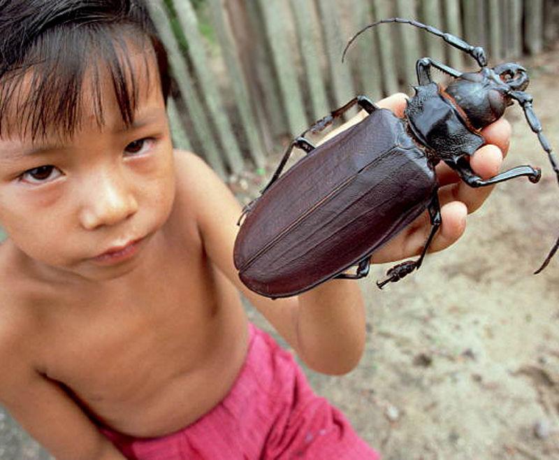 Гигантские насекомые 16 фото