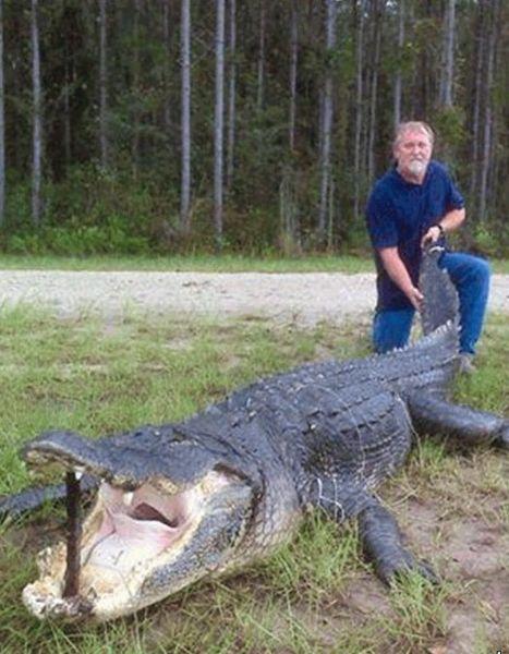 5-метровый крокодил в реке Святого Джона