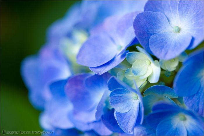Красивые снимки цветов от Martin Bailey