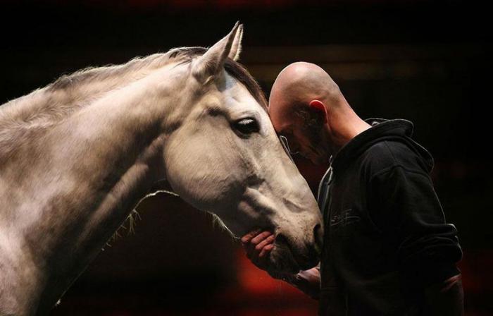 Театр лошадей