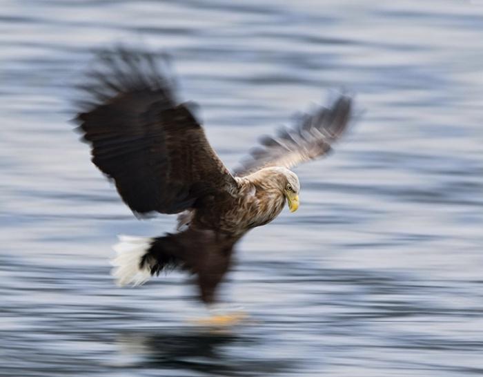 Дикая природа от Stian Holmen (27 фото)