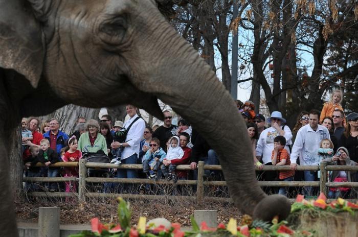 Национальный день тайского слона в зоопарке Денвера (14 фото)