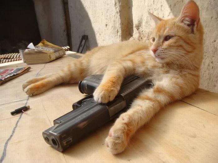 Акессуары котов