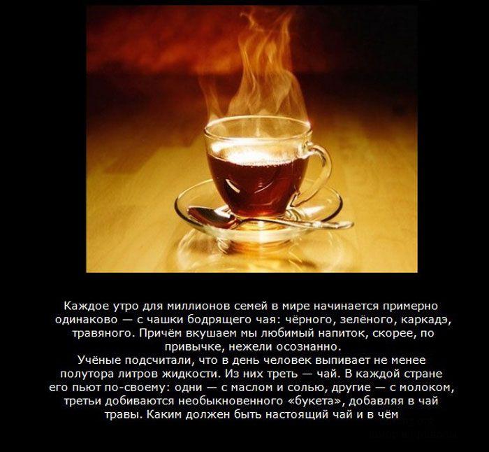 10 мифов о чае