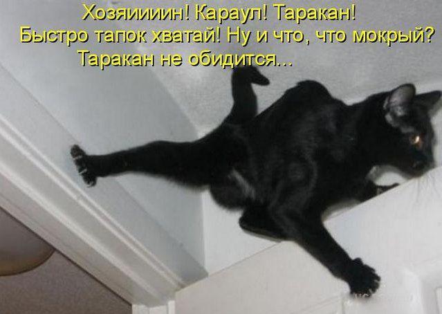 http://doseng.org/uploads/posts/2011-04/1302125097_4f43c4d8ee60.jpg