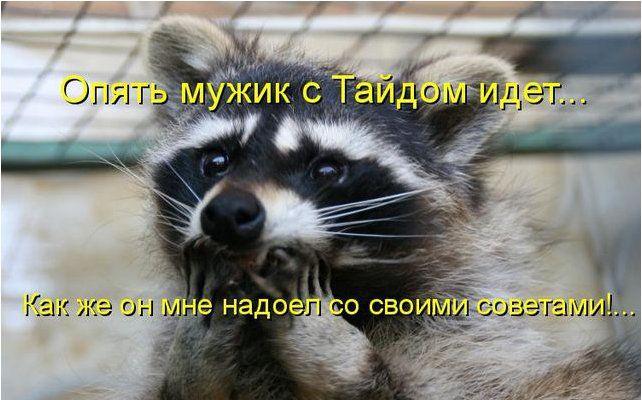 http://doseng.org/uploads/posts/2011-04/1302125122_03d74b138de2.jpg