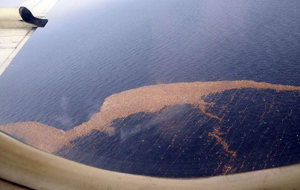 Мусор плывет к западному побережью США (27 фото)