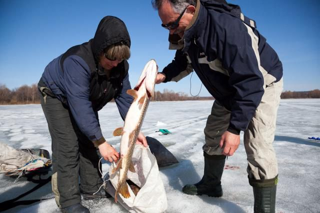 видео ловить рибу
