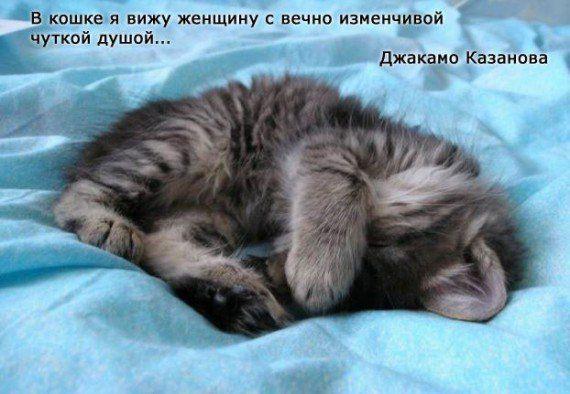 Знаменитые люди о кошках