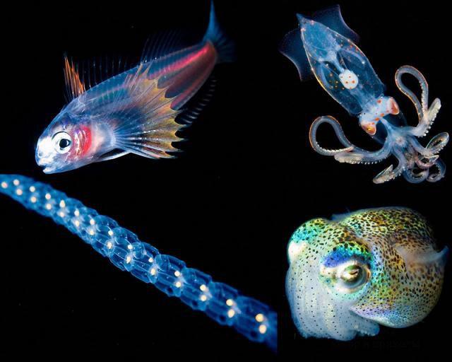 Светящиеся крошечные существа из морских глубин