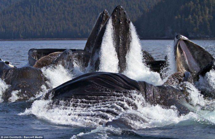 Удивительные кадры морских гигантов