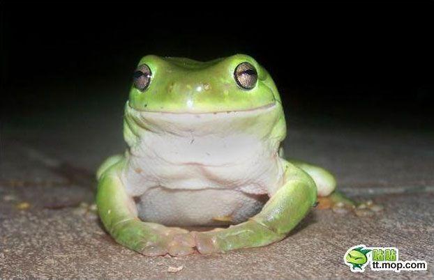 Прожорливая лягушка