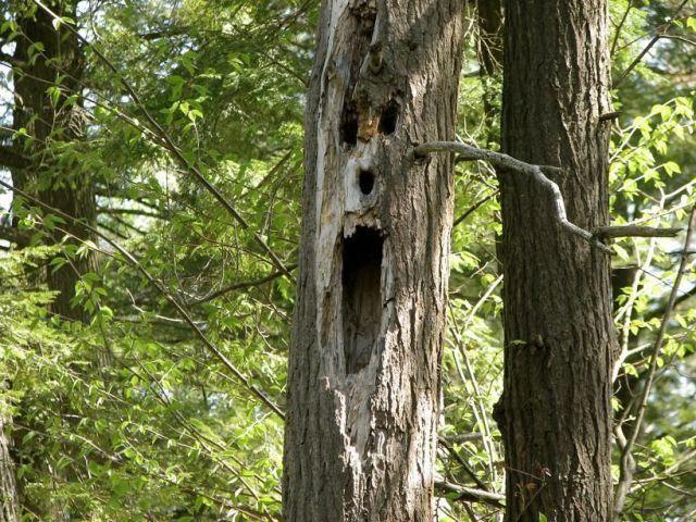фото дерево в виде пизды