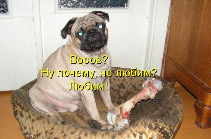 Картинки собаки с приколами и надписями