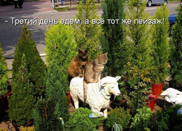 Смешные картинки с надписями прикольные с животными