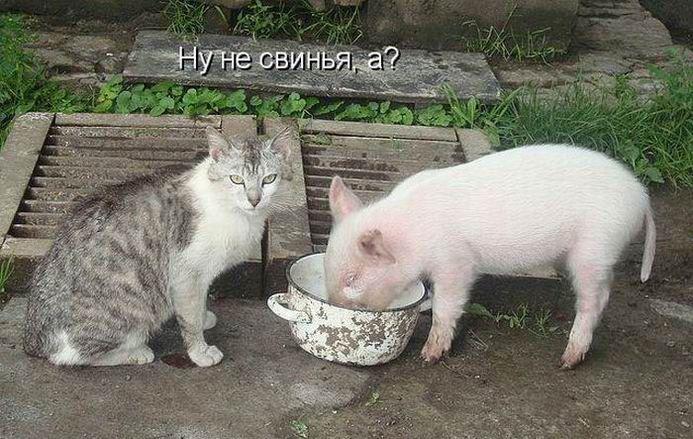 Днем, смешные картинки с животными с надписями новые серии