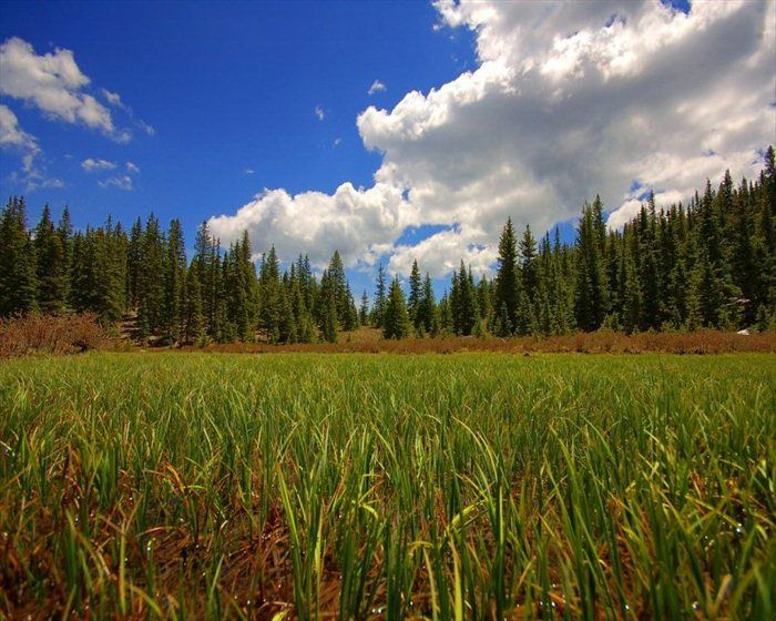Красивые фотографии природы (31 фото)