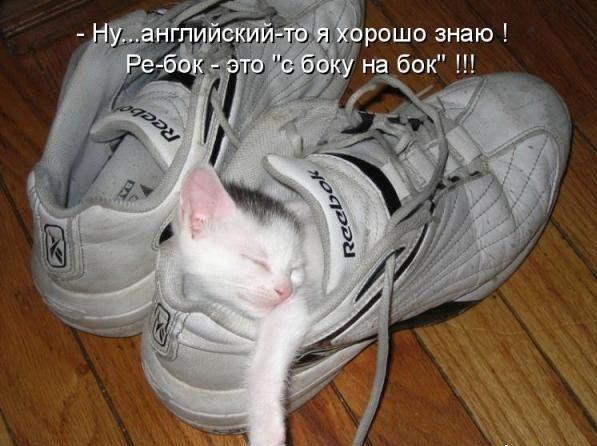 Самые смешные кошки этой недели 03 10 09 10