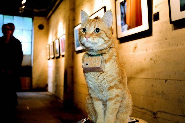 Взгляд на жизнь глазами кошки (35 фото)