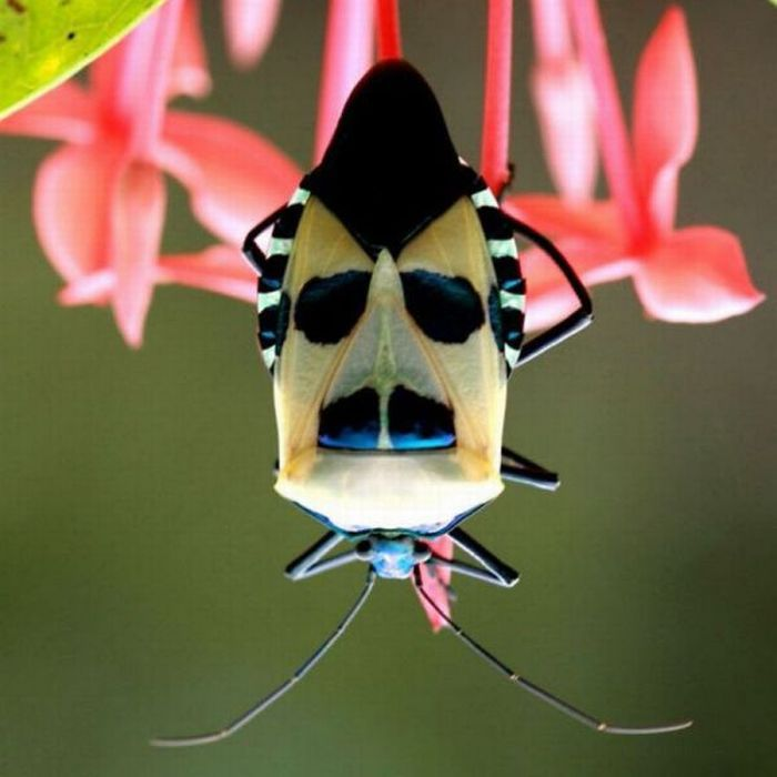 Божьей картинки, картинки прикольных жуков