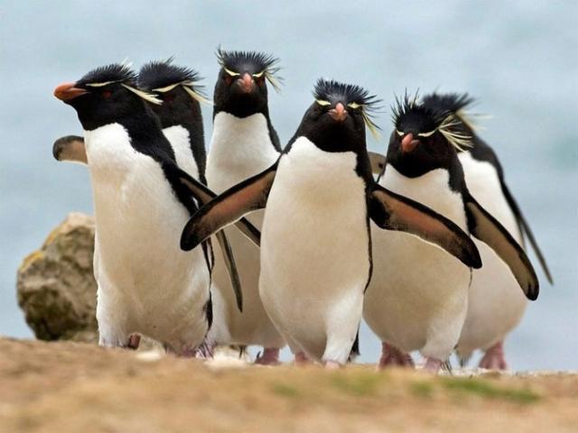 Удивительные животные - пингвины