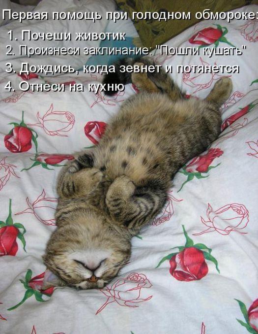 Смешные открытки с животными и надписями, можно