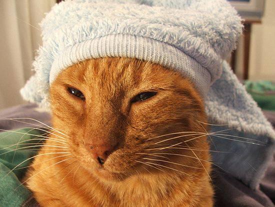 Прикольные коты в полотенцах