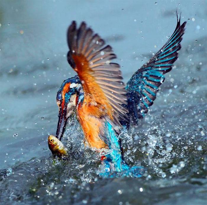 Интересная подборка фотографий птиц (32 фото)
