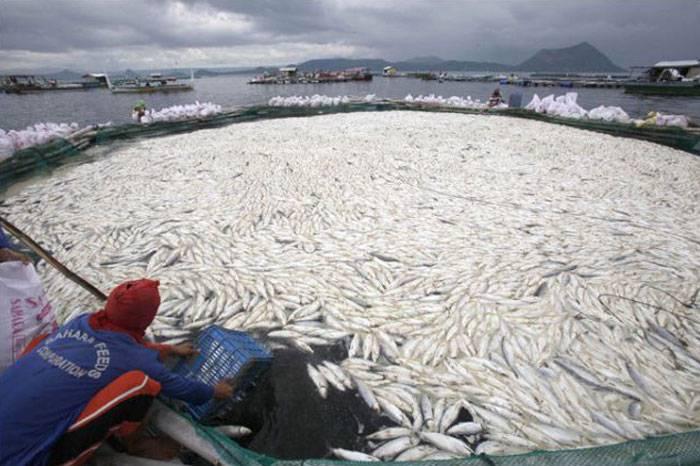 Массовый мор рыбы на Филиппинах