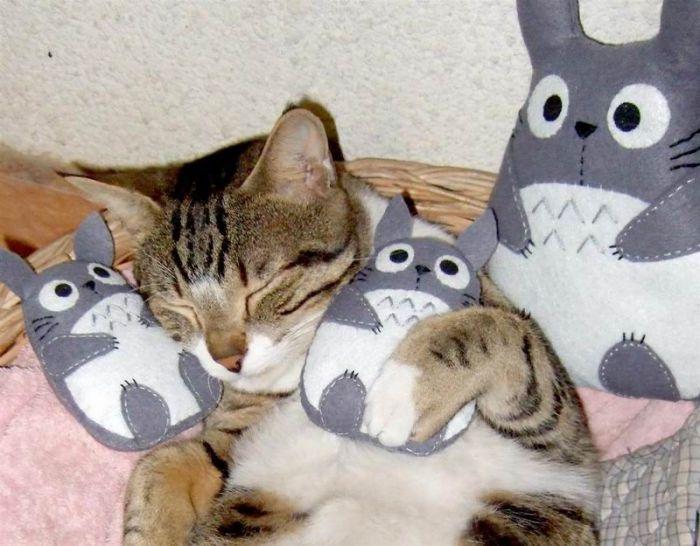 Животные и их мягкие игрушки
