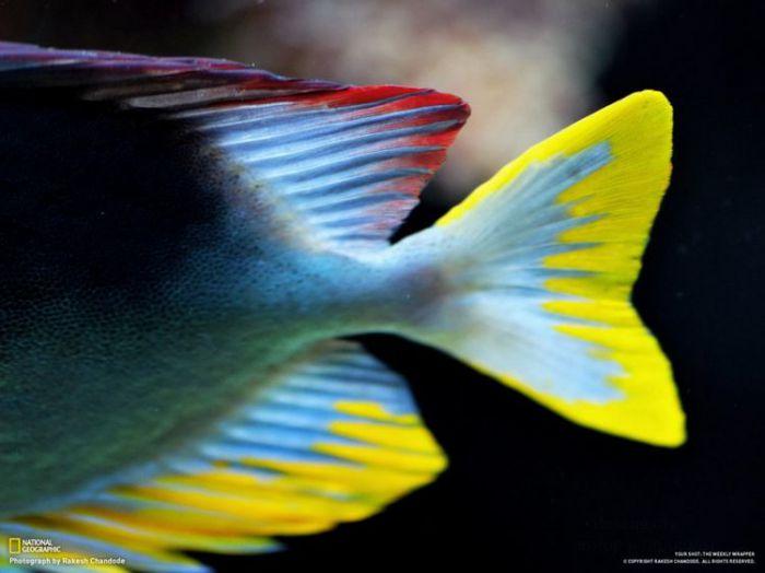 Фотографии от от National Geographic