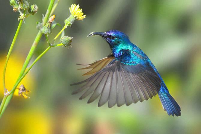 Красивые фотографии самых разных птиц