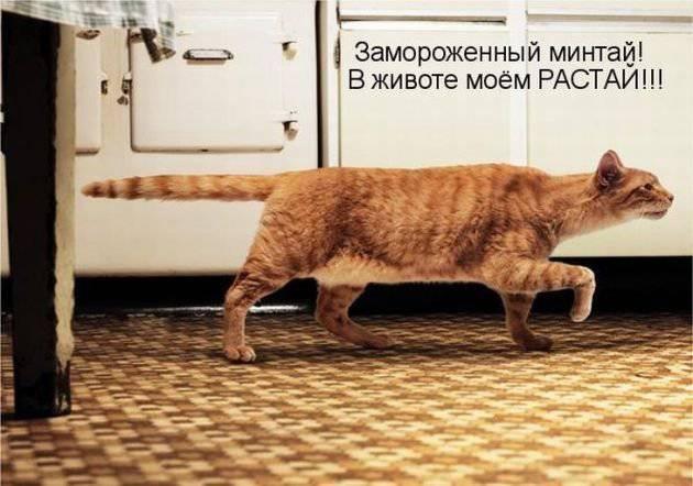 Прикольная котоматрица