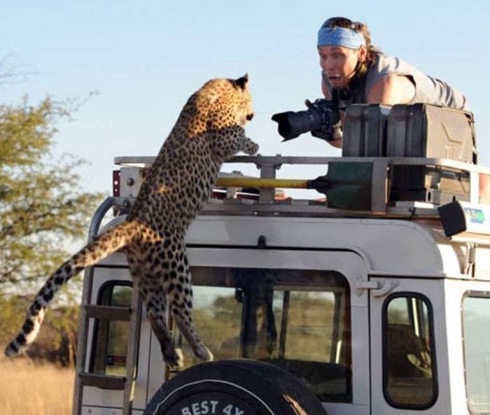 Как леопард напугал фотографов