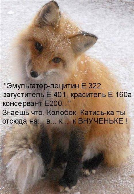 http://doseng.org/uploads/posts/2011-06/1307570359_1306852537_1306477718_kotomatrix_19.jpg
