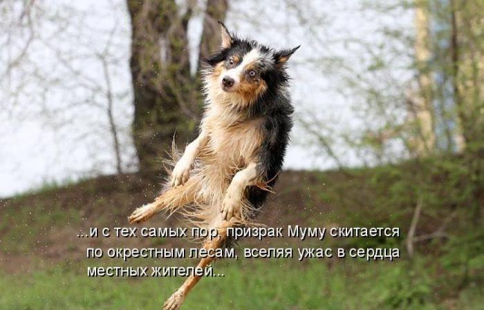 http://doseng.org/uploads/posts/2011-06/1307570394_1306852487_1306477730_kotomatrix_29.jpg