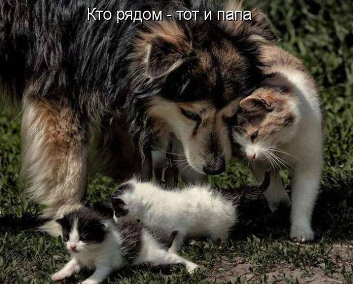http://doseng.org/uploads/posts/2011-06/1307570492_1306852508_1306477739_kotomatrix_03.jpg