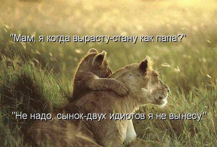 http://doseng.org/uploads/posts/2011-06/1307570507_1306852522_1306477741_kotomatrix_26.jpg