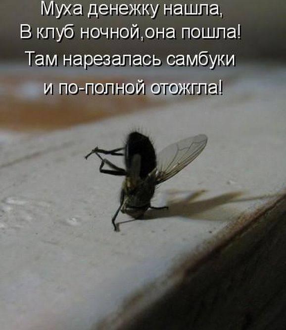http://doseng.org/uploads/posts/2011-06/1307570587_1306852504_1306477770_kotomatrix_41.jpg