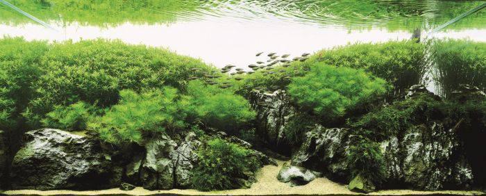 Самые красивые аквариумы в мире (21 фото)