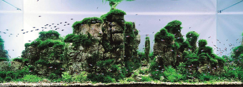 aquariums outreach team worked - 1440×518