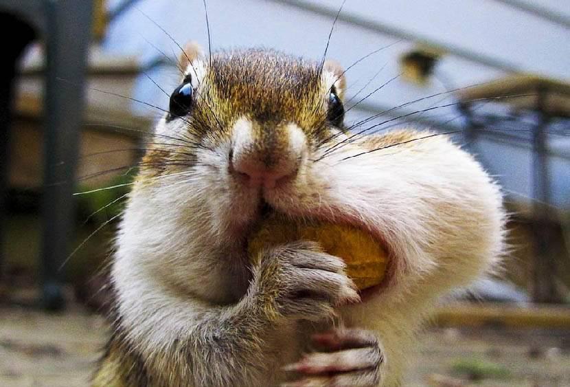 Фото приколы бесплатно, смешные фото приколы животных и девушек
