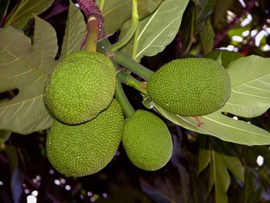 10 экзотических съедобных растений