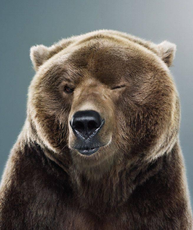Медведи от фотографа Jill Greenberg ... (39 фото)