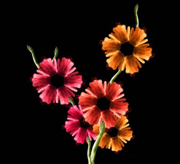 Девушки-цветы художницы Cecelia Webber