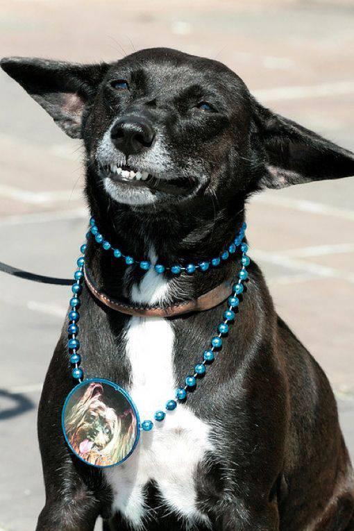 Собаки улыбаются (24 фото)