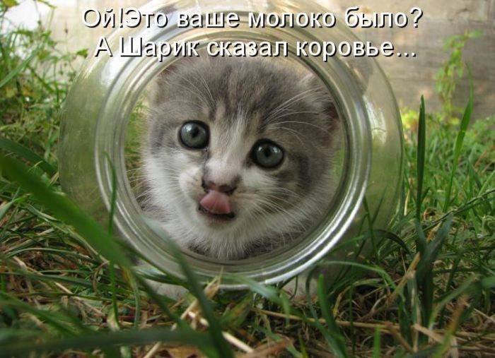 Смешные коты в картинках с надписями