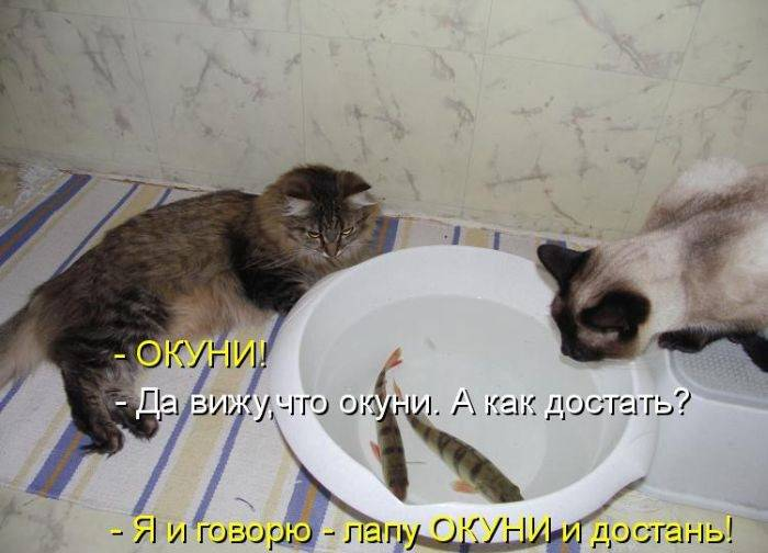 http://doseng.org/uploads/posts/2011-06/1309130039_1308593525_1308295465_kotomatrix_27.jpg