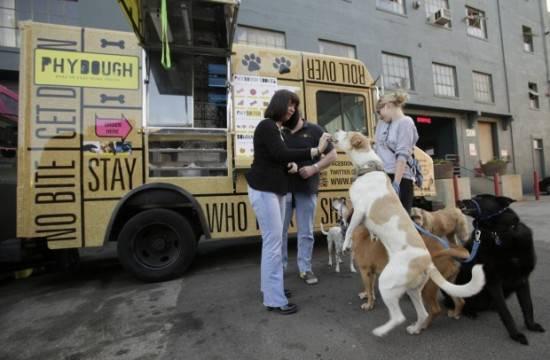Грузовик с мороженным для собак (4 фото)